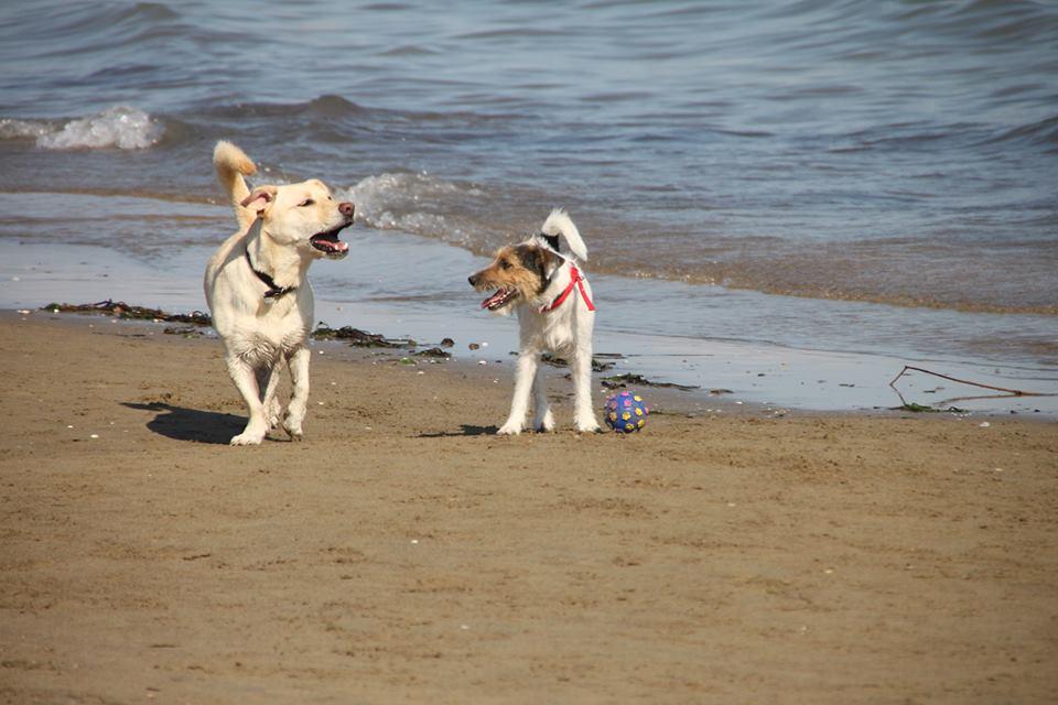 spiaggia di Duke