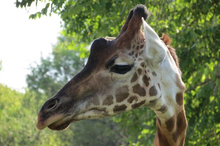 parco zoo lignano