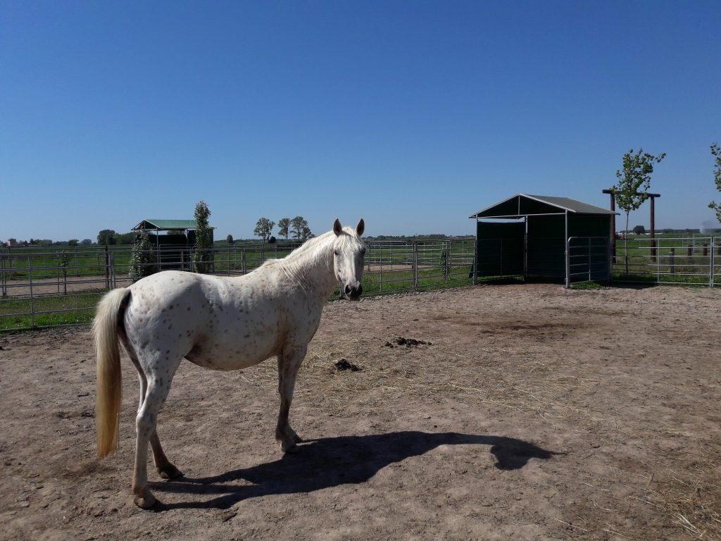 Scopri virginia ranch il maneggio vicino a bibione e for Piccoli progetti di ranch