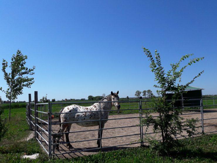 Maneggio Virginia Ranch