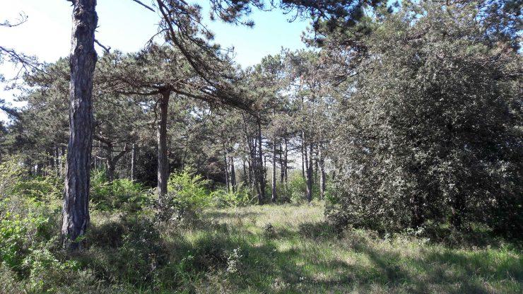 Parco Della Biodiversita Lino Delle Fate