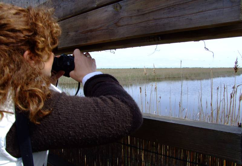 Birdwatching Bibione