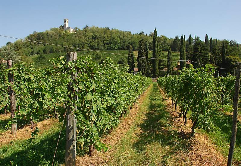 Colli Friuli Venezia Giulia