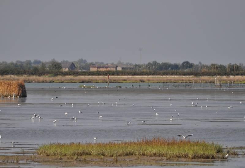Laguna & Valli